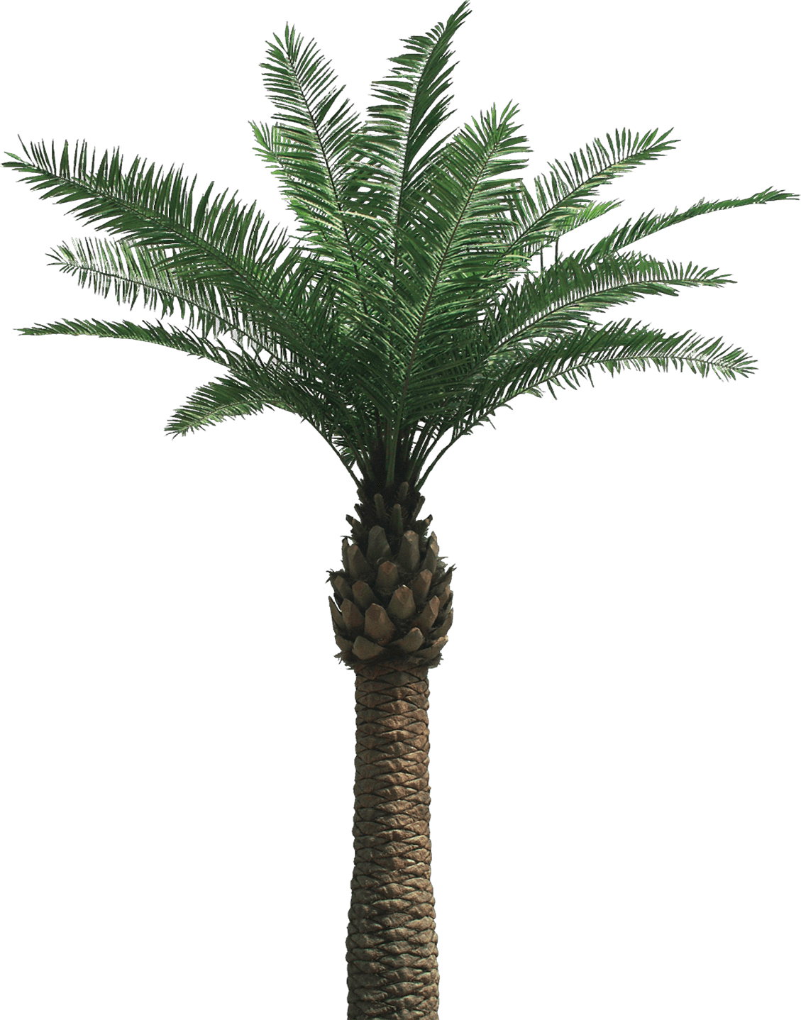 Palm trees tumblr png. Large tree transparent stickpng