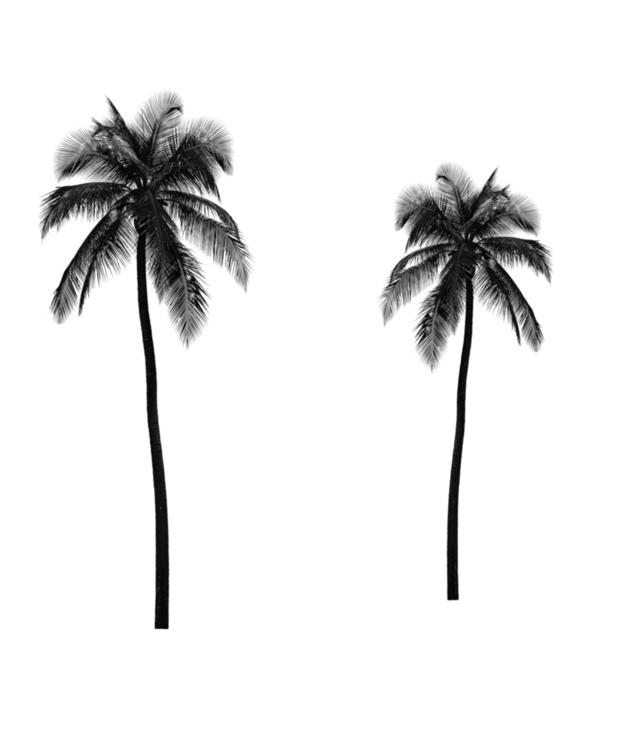 Palm trees tumblr png. Black and white interesting