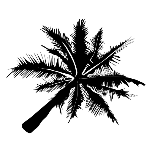 Palm trees vector png. Silhouette tree transparent svg