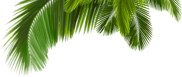 Palmera tropical png. Palpatine image related wallpapers