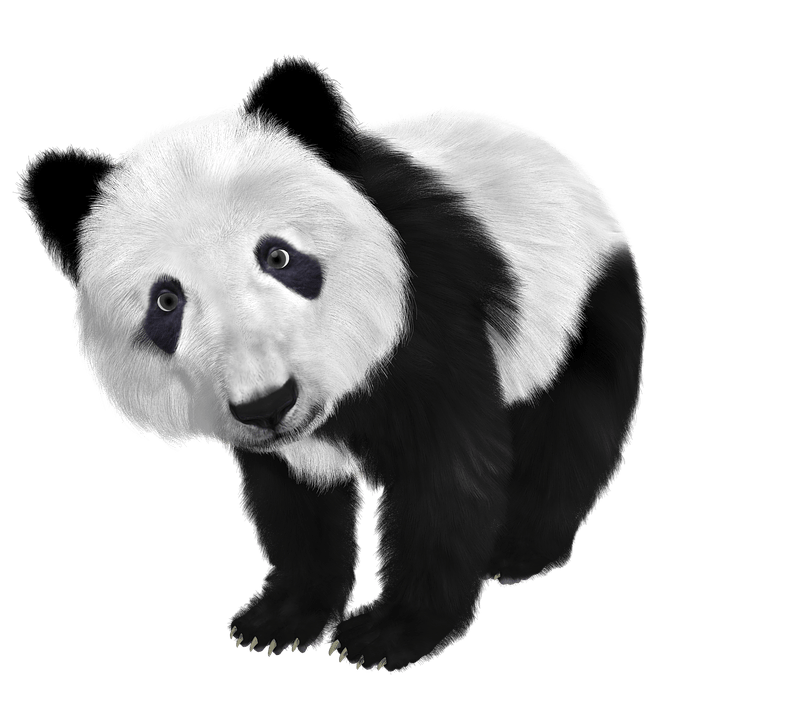 Panda desiigner png. These are the lyrics