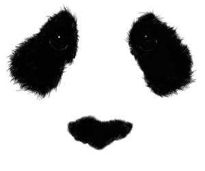 Panda ears png. Via tumblr uploaded by