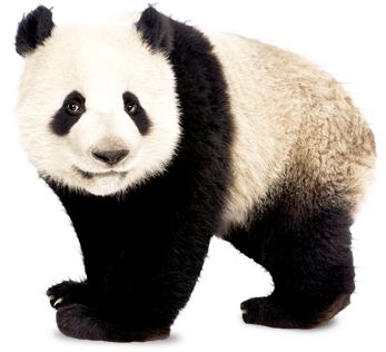 Giant panda png. Hd vector clipart psd