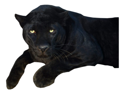 black jaguar png