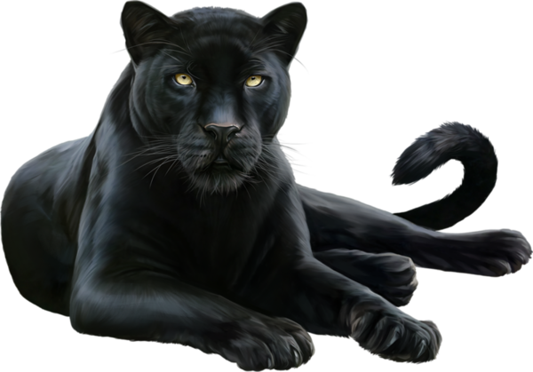 Panther png. Hd mart