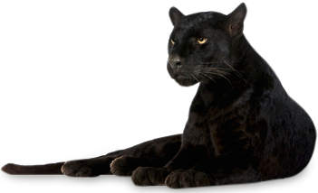 Panther transparent. Png images all clip royalty free download