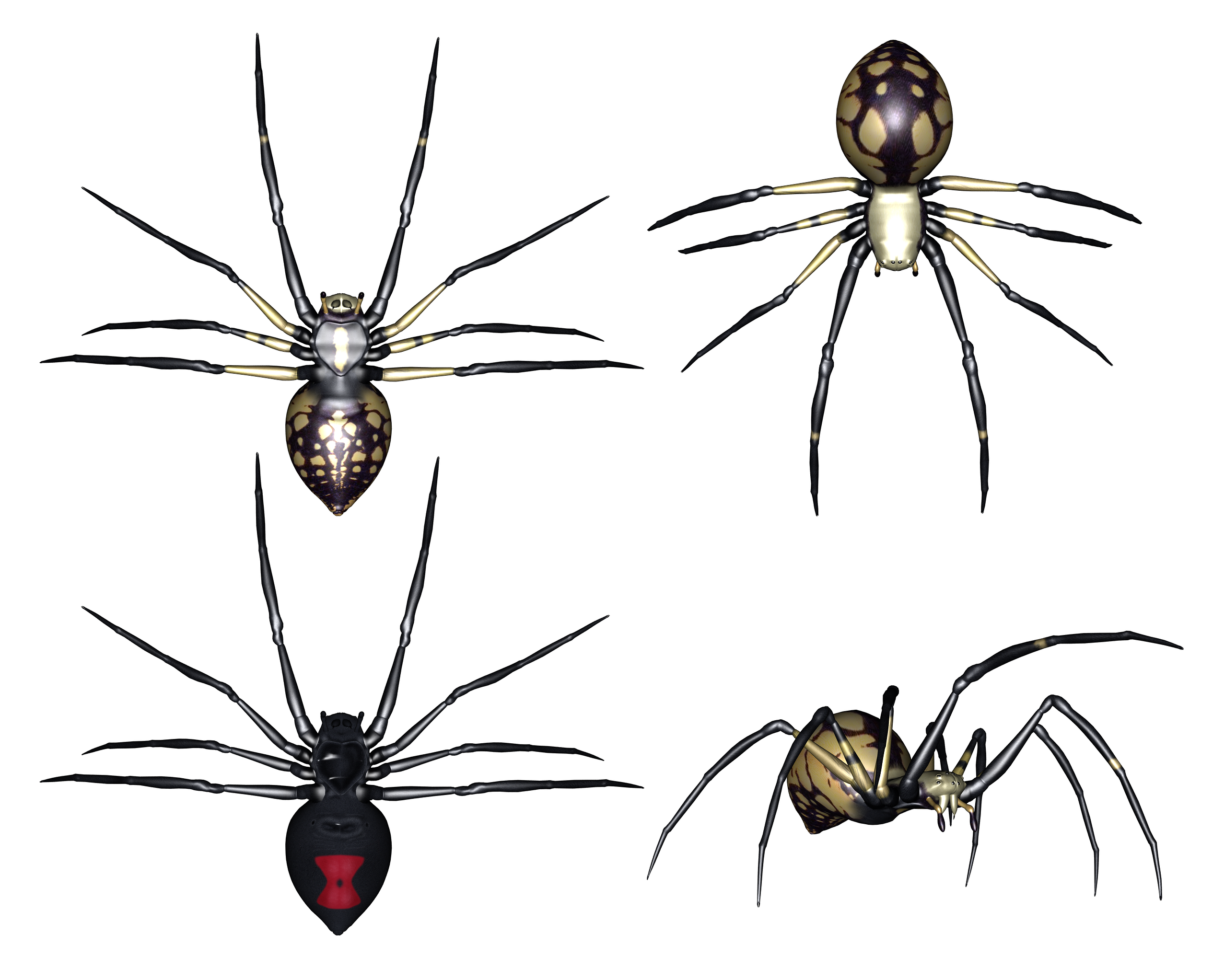Parasitism drawing arachnids. Set of spiders clipart