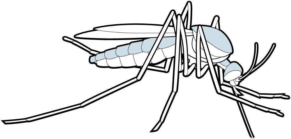Parasitism drawing mosquito. Mosquitoes loyola university chicago