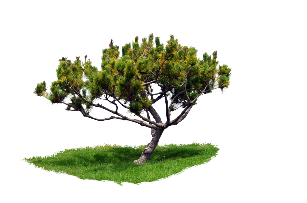 Park trees png. Tree with grass pine
