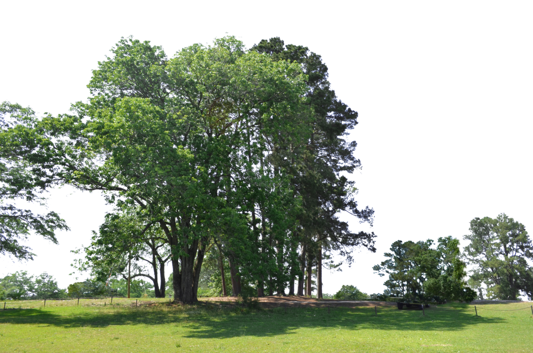 Park trees png. At the stock photo