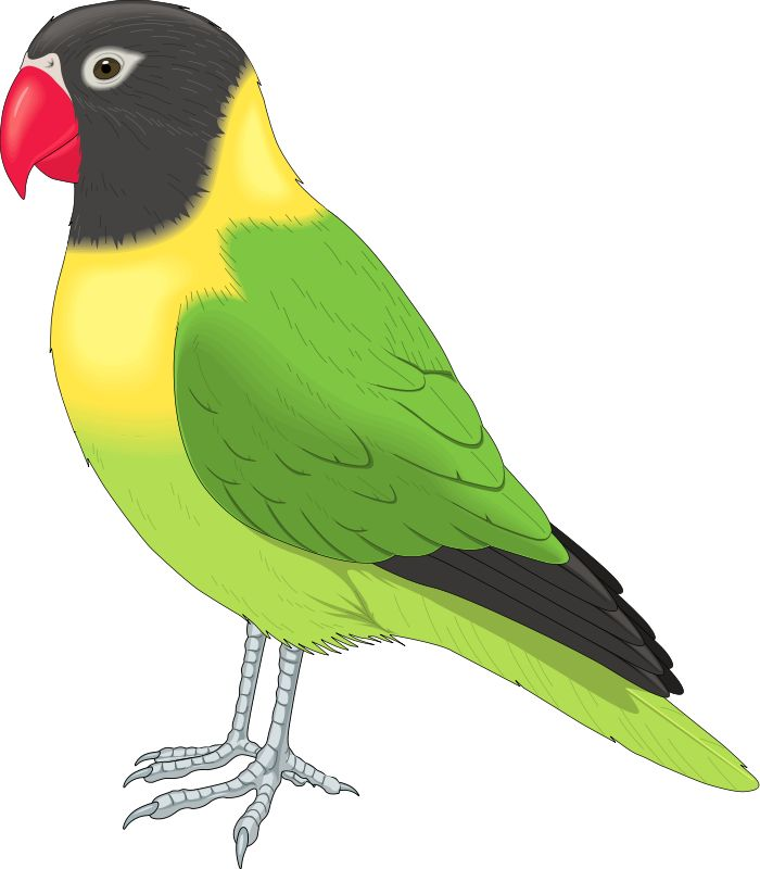 Parrot clipart colourful parrot. At getdrawings com free