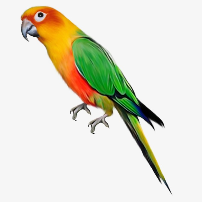 Creative colorful birds png. Parrot clipart colourful parrot banner library download