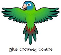 Parrot clipart green cheek conure. Archive birds cartoon blue