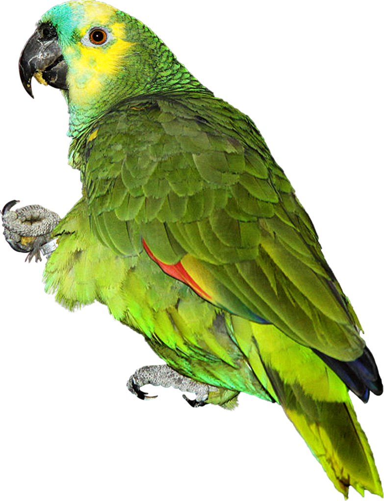 Parrot png. By makiskan on deviantart