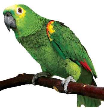 Parrot png. Transparent pictures free icons
