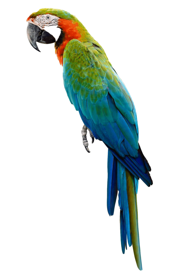 Parrot png. By lg design on
