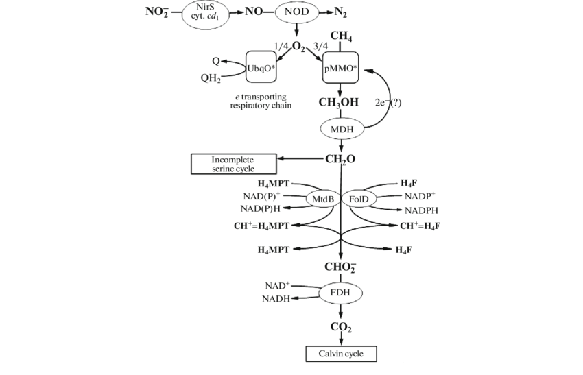 Ti drawing chain. Catabolism and energy metabolism