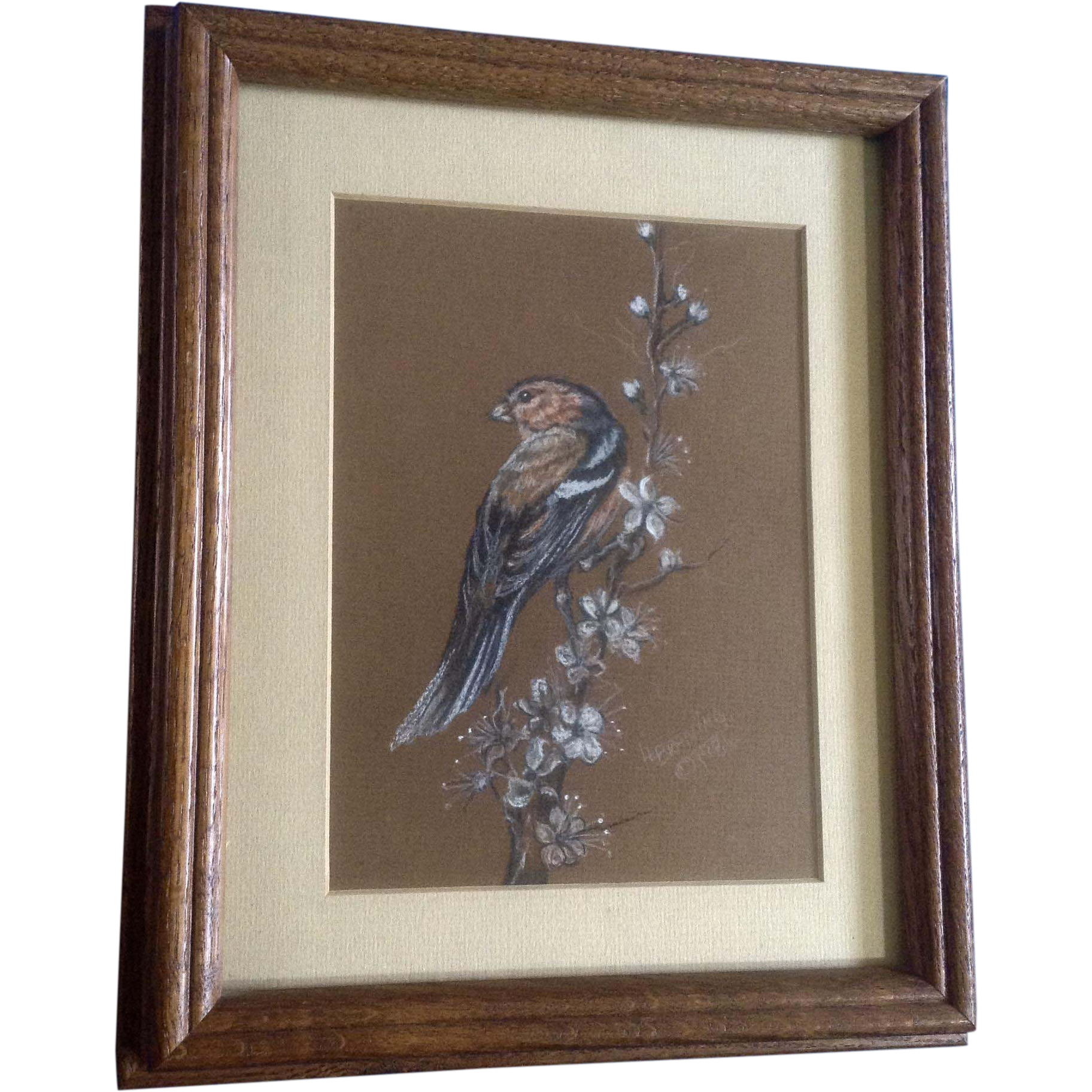 Pastels drawing bird. L braning sparrow on