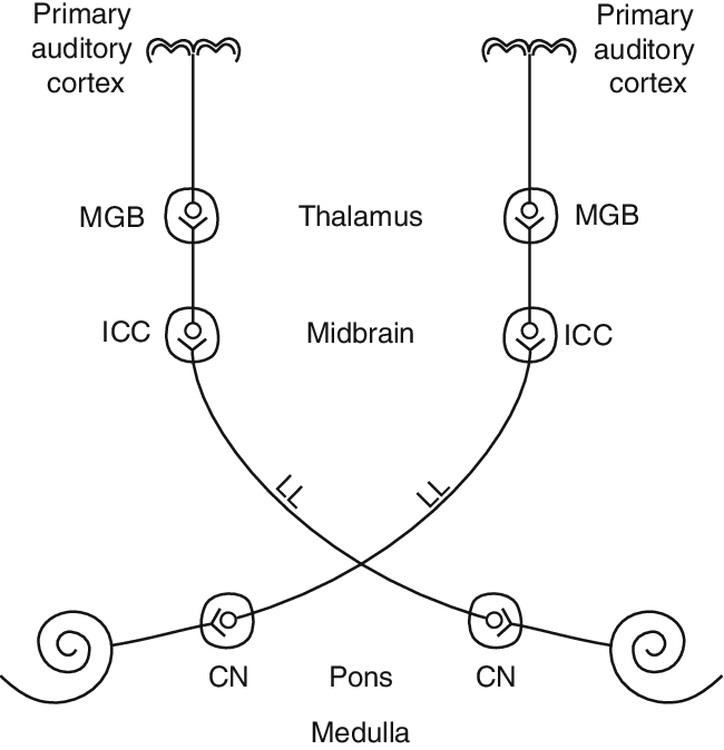 Pathway drawing. Schematic of the anatomical
