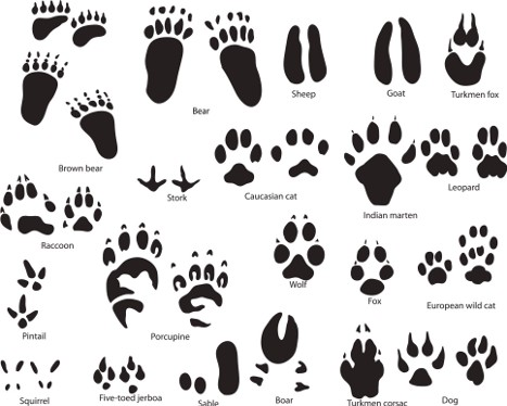 Paw clip art animal. Prints raccoon chatta