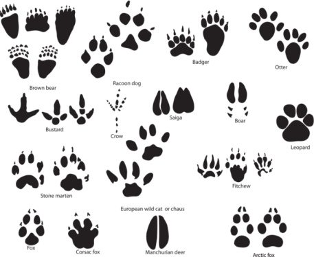 Paw clip art animal. Prints clipart chatta artprints