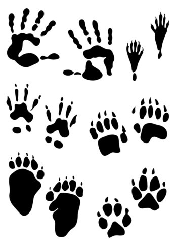 Paw clip art animal. Prints clipart clipartfest wikiclipart