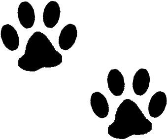 Paw clip art clear background. Print clipart no dog