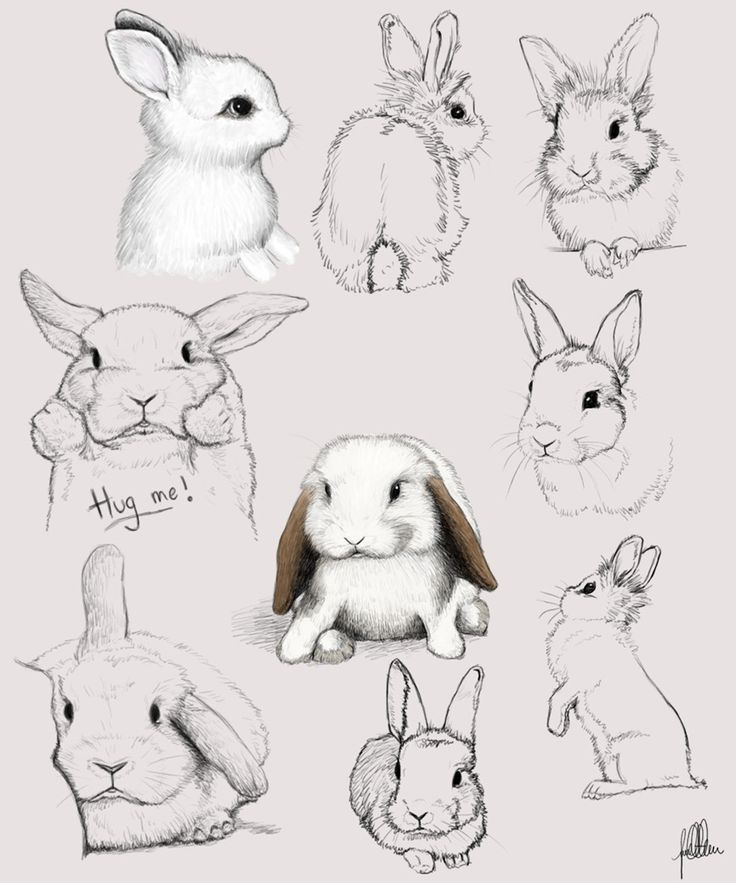 best bunny images. Paw clip art rabbit banner black and white