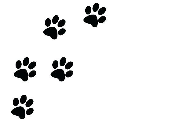 Paw clip art transparent background. Dog prints clipart group