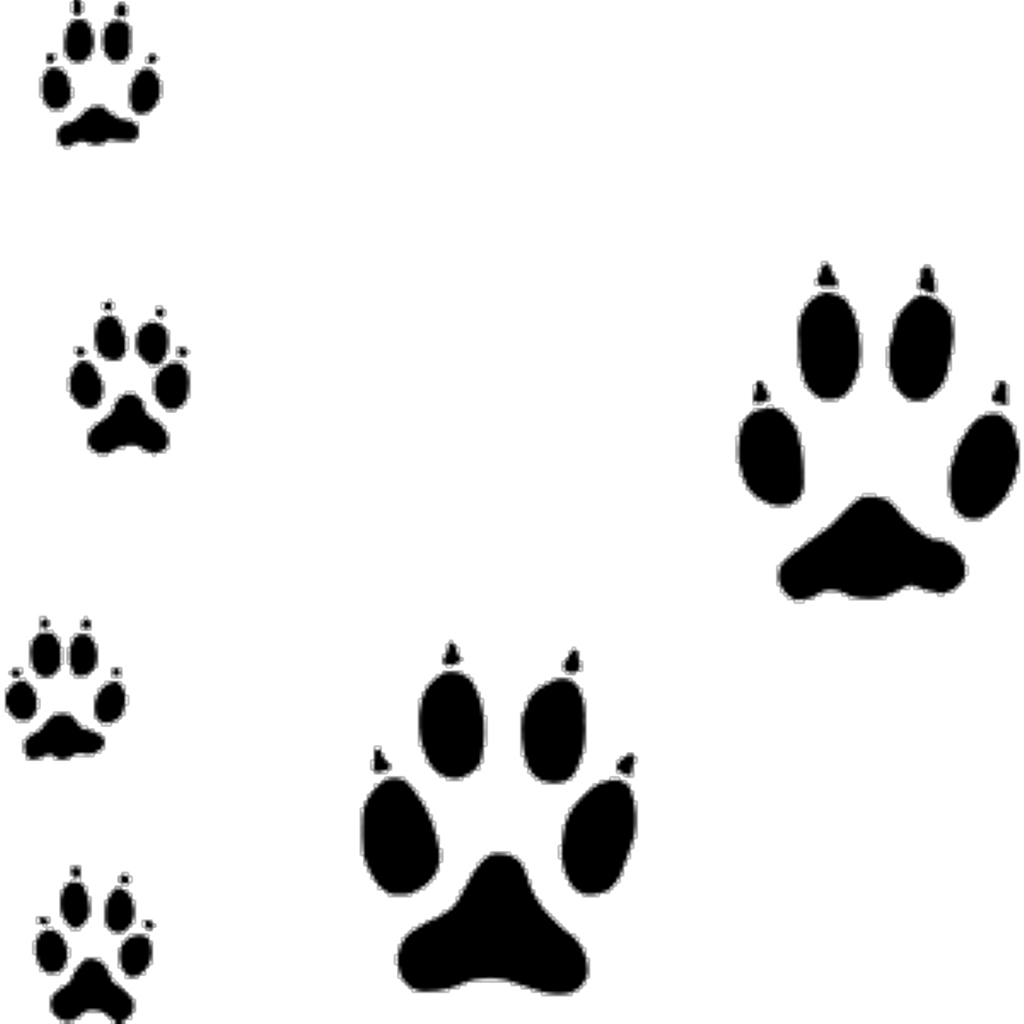 Transparent paw coyote. Freetoedit paws tracks silhouette
