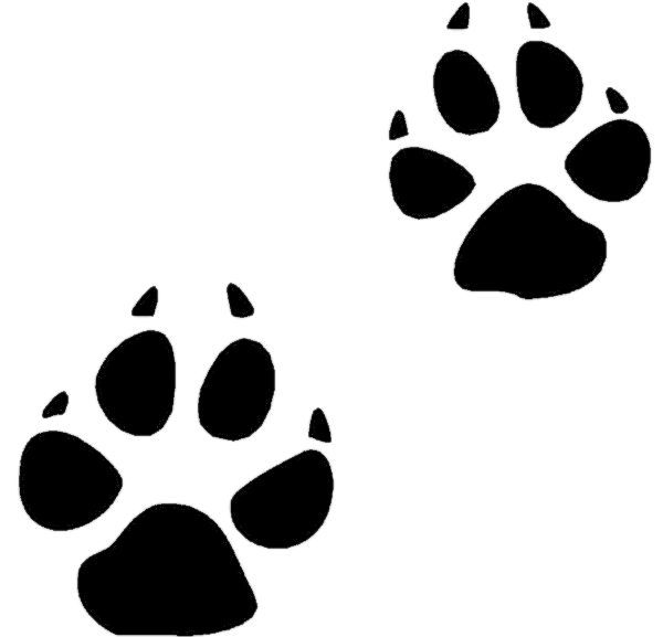 Cat paw prints png. Coyote transparent stickpng