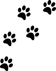Transparent paw white cat. Prints png stickpng