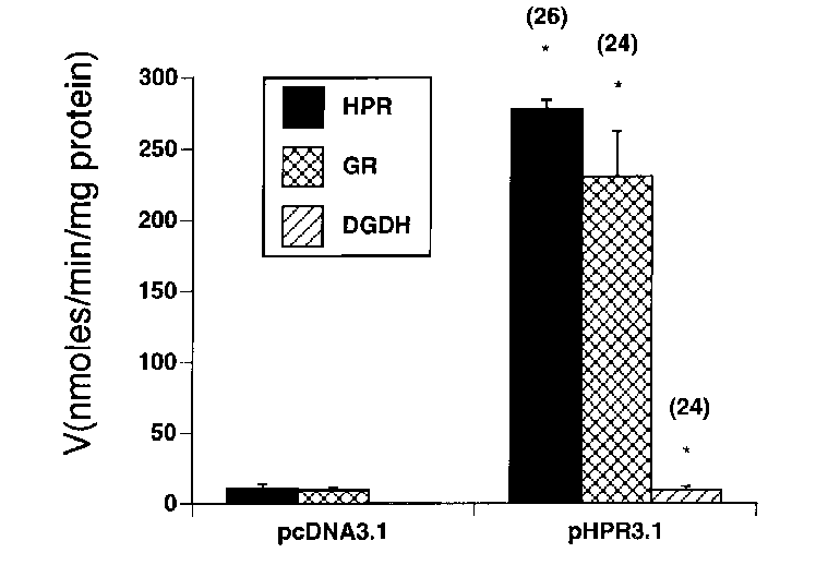 Pcdna3 vector png. The hgrhpr cdna encodes