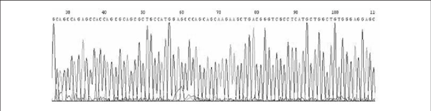 Pcdna3 vector sequence. Verification of the identity