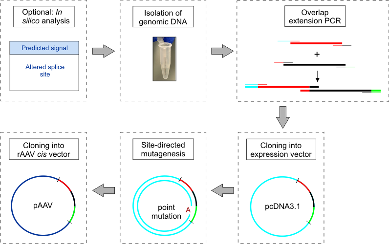 Bio vector disease. Construction and cloning of