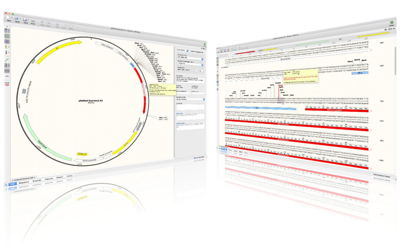 Vector viewer nti. Plasmid maps and sequences