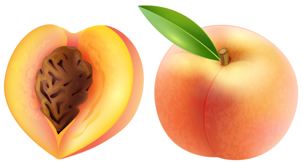 peaches clipart sliced
