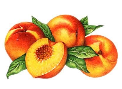 Peach clipart face. Pin by on fruits