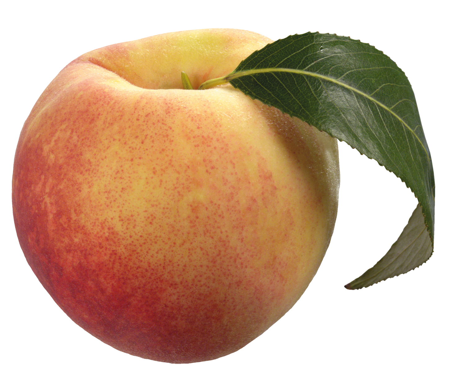 Peach clipart png. With green leaf best