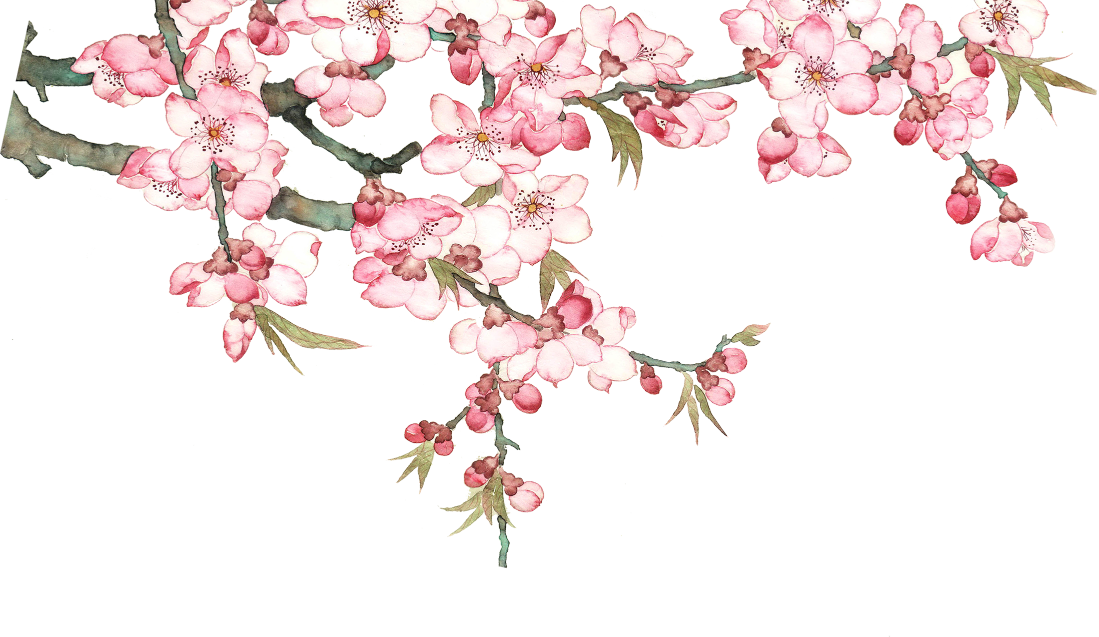 Peach flowers png. Download pixel watercolor blossom