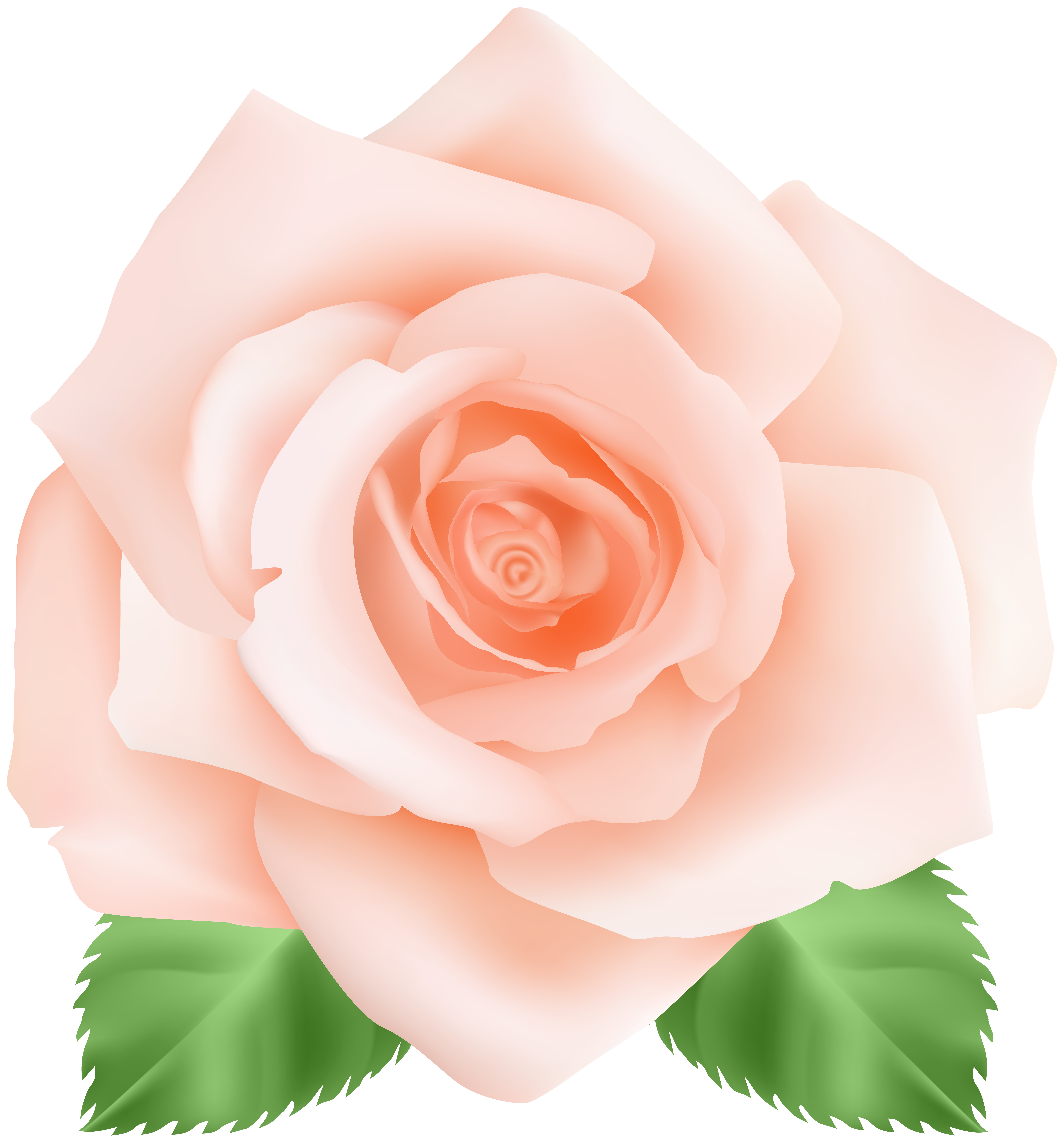 Peach rose png. Clip art image gallery
