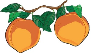 Peaches clipart. Free image food realistic