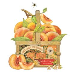 Peaches clipart basket peach. Baskets for the june