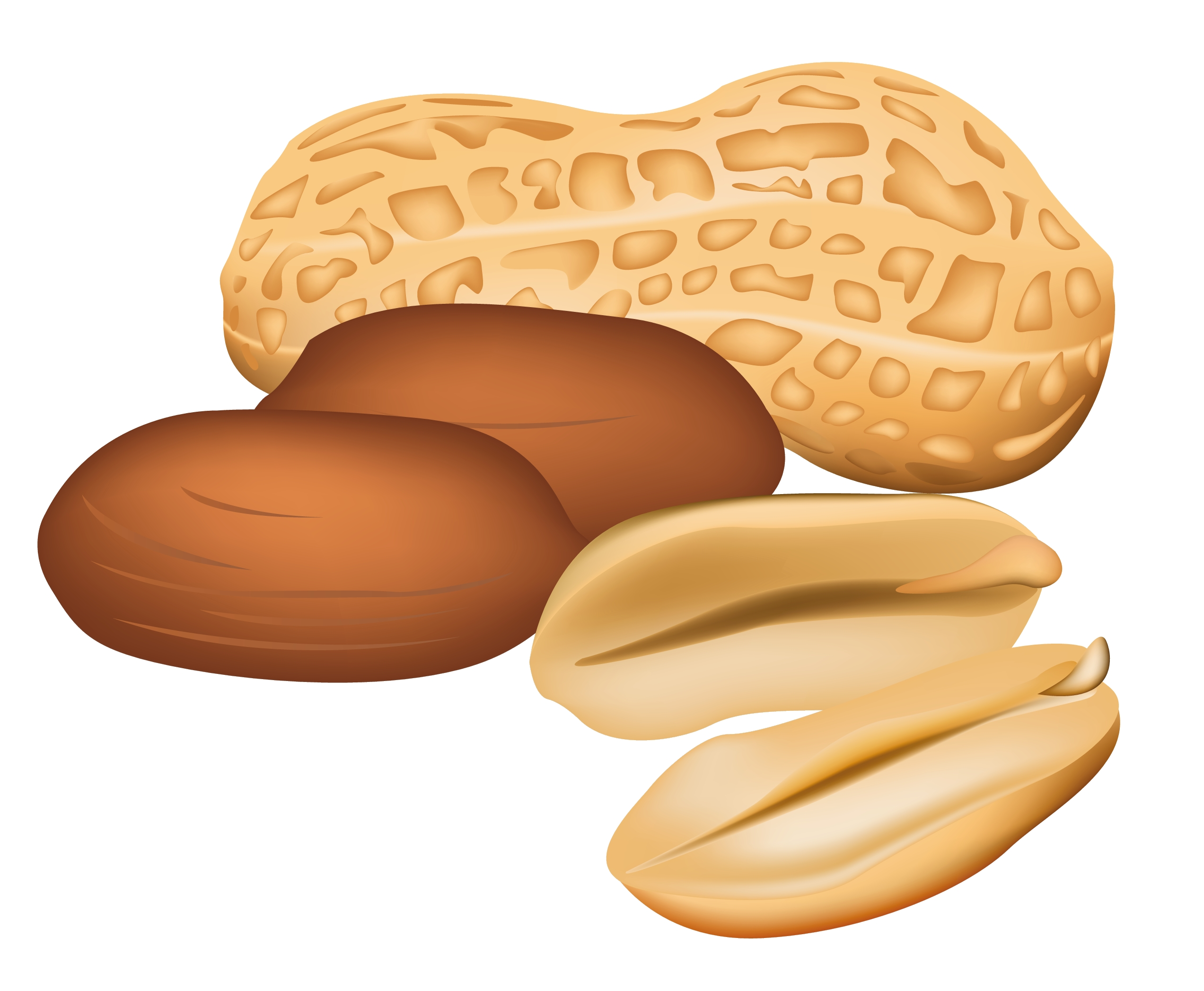 Peanut clipart. Awesome collection digital g