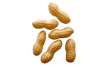 Peanuts transparent shelled