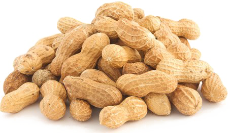 Transparent peanut file. Png images free download