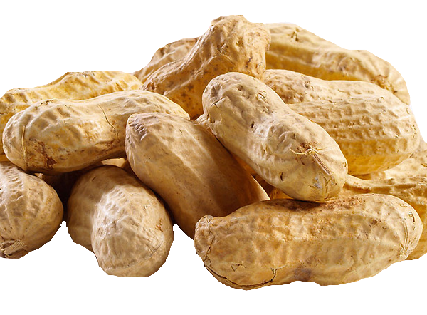 Transparent peanut brown. Download free png picture