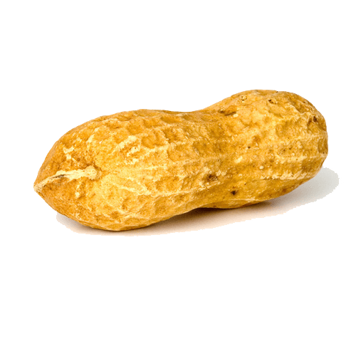 Transparent peanut. Solo png stickpng food