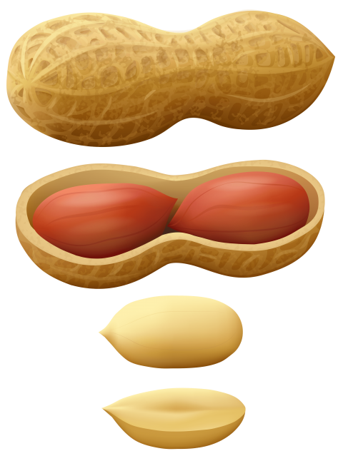 Peanuts transparent background. Png free images toppng