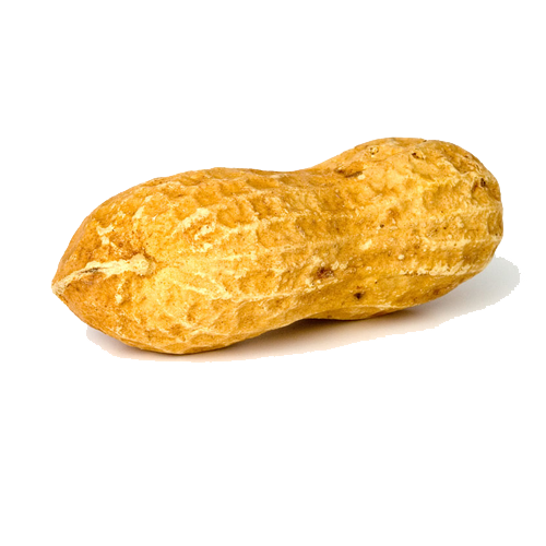 Peanuts transparent one. Free peanut png images